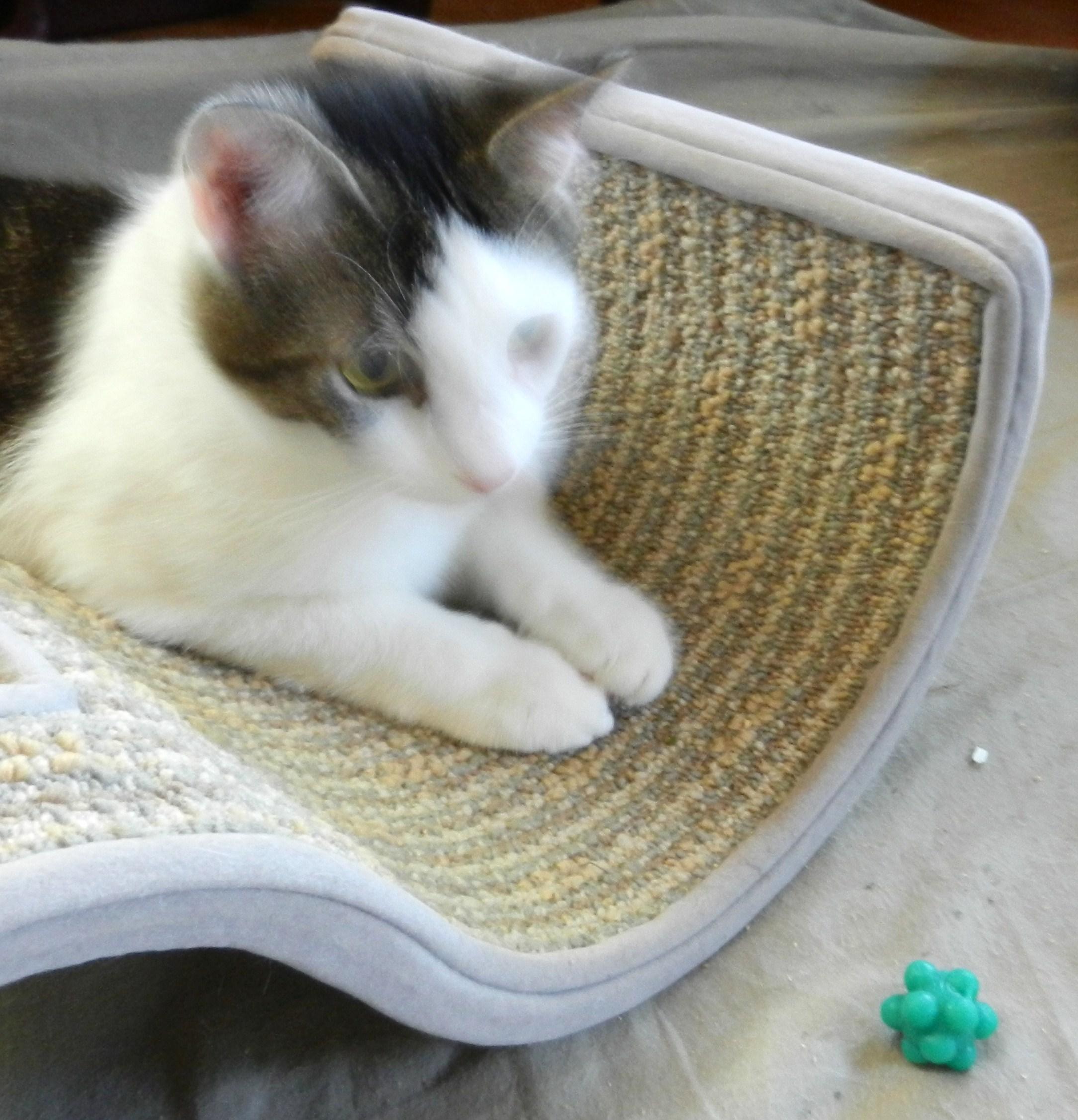 Frenzy Cat Toy Uk