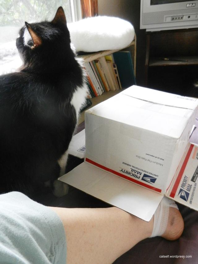 catio-box 001